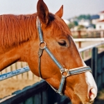 赤ひげ|競馬投資 レース予想詐欺被害の相談サポート